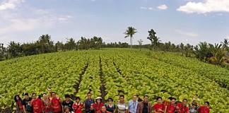 Negeri Tembakau